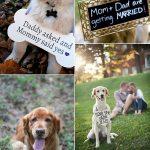 30 Precious Wedding Photo Ideas with Dogs
