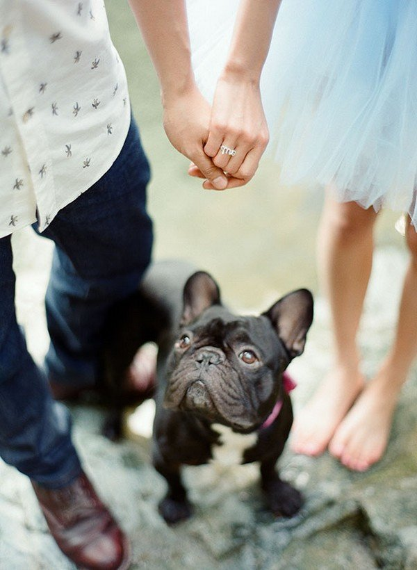 engagement announcement photo ideas with dogs