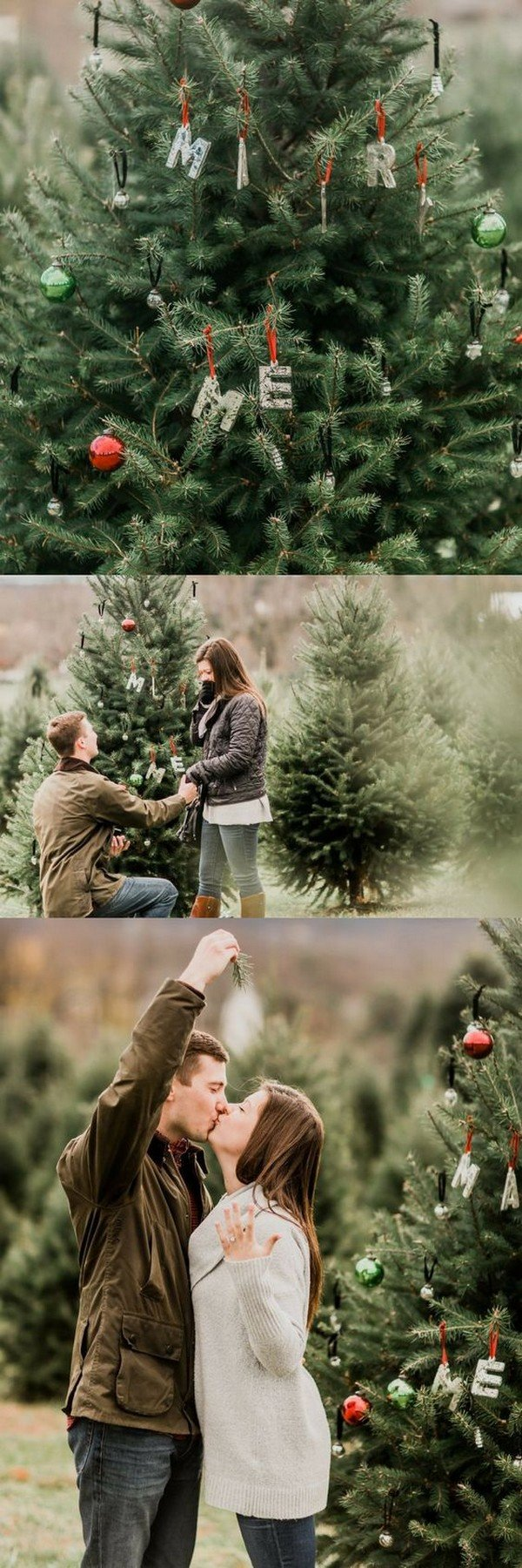 Christmas tree farm proposal ideas