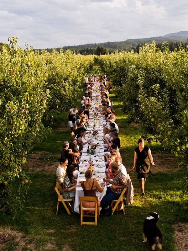 vineyard themed long table wedding reception ideas