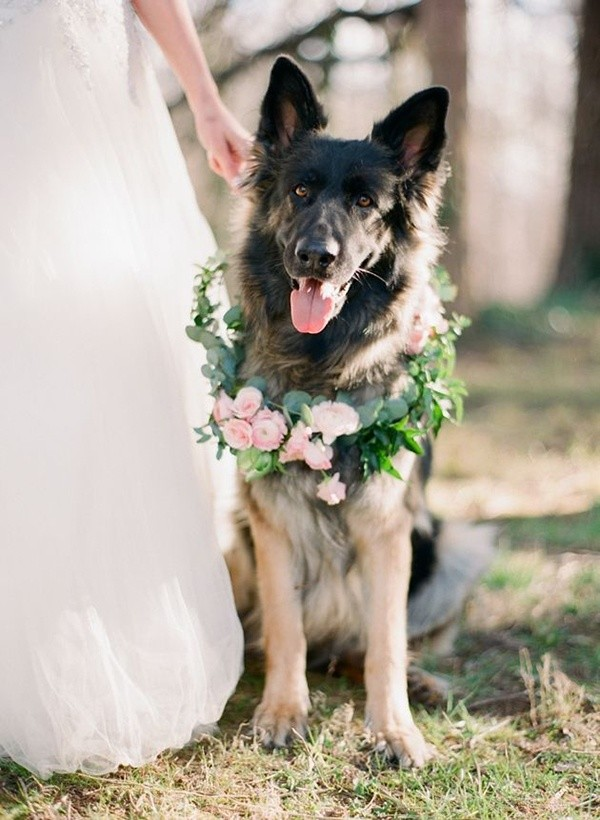 dogs at weddings ideas for 2017 trends