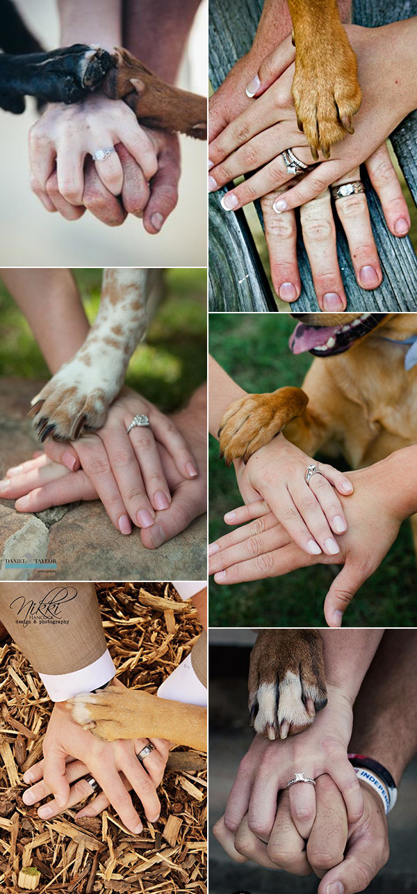 hand by hand memorable wedding photo ideas with dogs