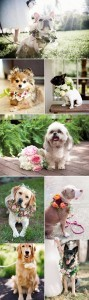 wedding photo ideas with your love dogs