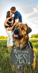 sweet engagement photo ideas with dogs