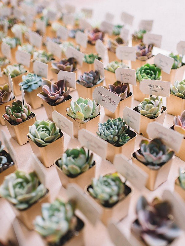 succulents as escort cards and wedding favors