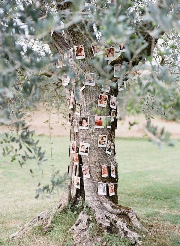 family tree wedding photo display ideas