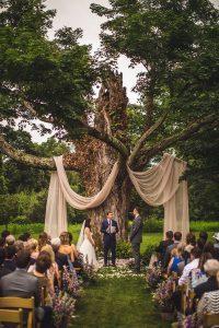 big tree with drapery wedding backdrop ideas