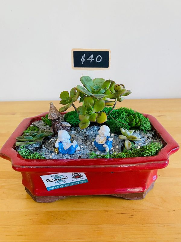 Succulent Arrangement Featuring Ruby Red As Centrepiece. Home Of The Budda